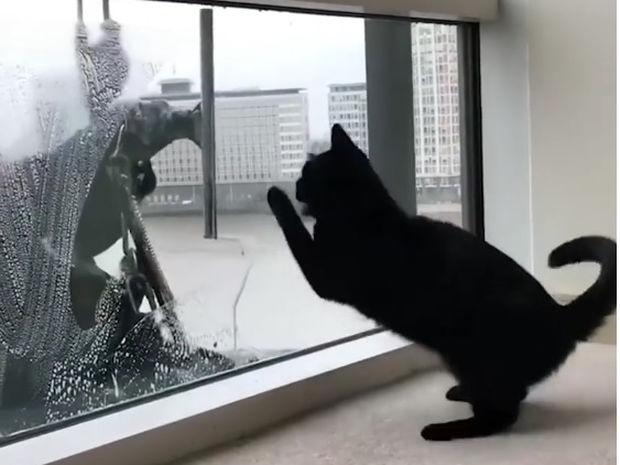 Ξεκαρδιστικό! Η καθημερινή συνάντηση της γάτας με τον καθαριστή τζαμιών!