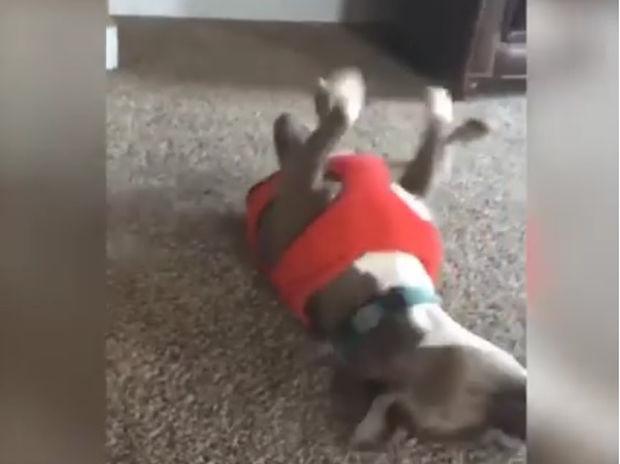 Μοναδικό! Δείτε τον σκυλάκο να κάνει «τροχό» μαζί με το κοριτσάκι!