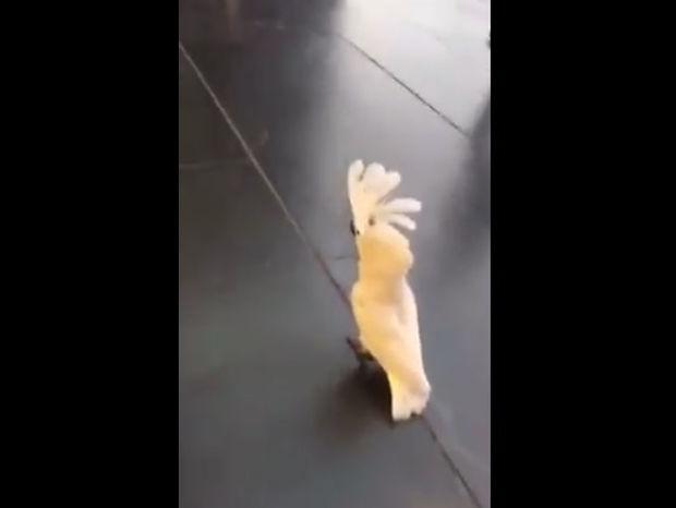 Αυτός είναι ο πιο παράξενος... «σκύλος» του κόσμου! (video)