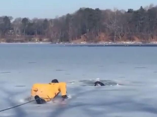 Ο πυροσβέστης σώζει τον σκυλάκο που παγιδεύτηκε στην παγωμένη λίμνη!