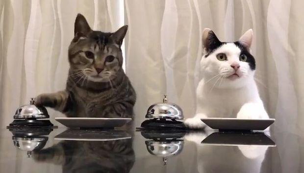 """Τα αξιολάτρευτα γατάκια """"εκπαιδεύουν"""" το αφεντικό τους (video)"""