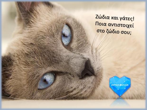 fa9e61425198 Ποια γάτα αντιστοιχεί στο ζώδιο σου  - Astrology.gr