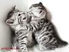Ζώδια και σχέσεις: Αυτό το ζευγάρι θα ζήσει έναν θυελλώδη έρωτα