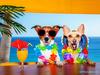 Με αυτά τα 4 ζώδια ΔΕΝ θέλεις να πας διακοπές