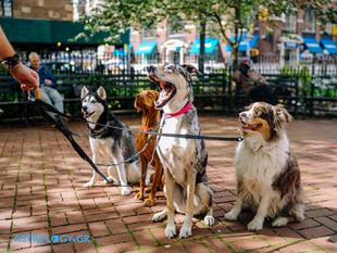 Είσαι dog lover; Αυτή είναι η ιδανική ράτσα σκύλου για το ζώδιό σου!