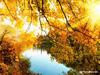 Αριθμολογία: Προβλέψεις για τα Ερωτικά και Οικονομικά του Νοεμβρίου