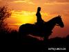 Ονειροκρίτης: Μήπως είδες στον ύπνο σου άλογο;