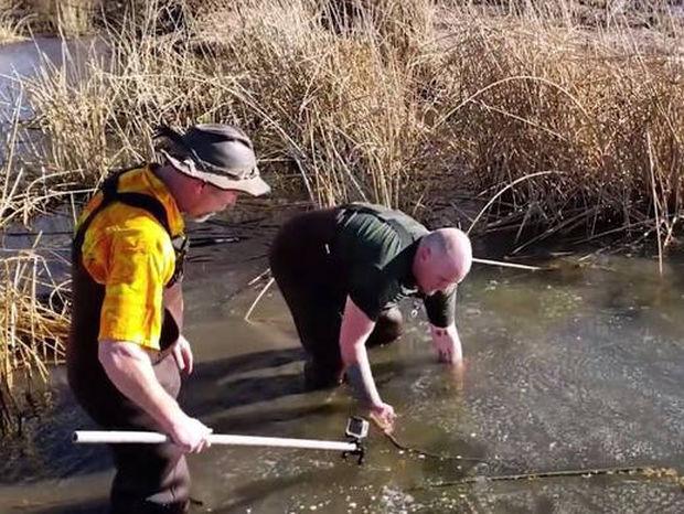 Απίστευτη διάσωση αλιγάτορα που εγκλωβίστηκε στον πάγο (vid)