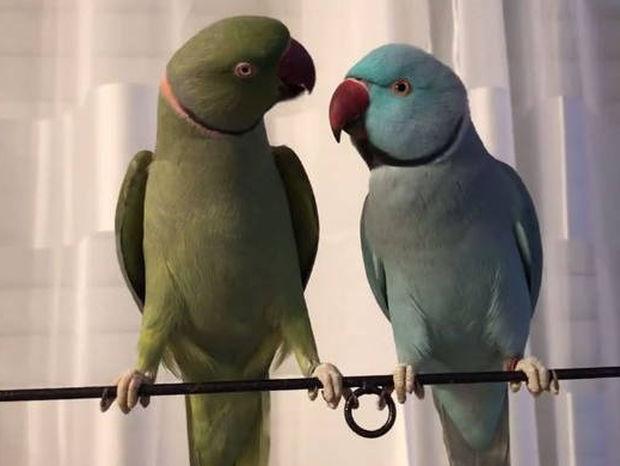 Δύο παπαγάλοι τα... λένε! (vid)