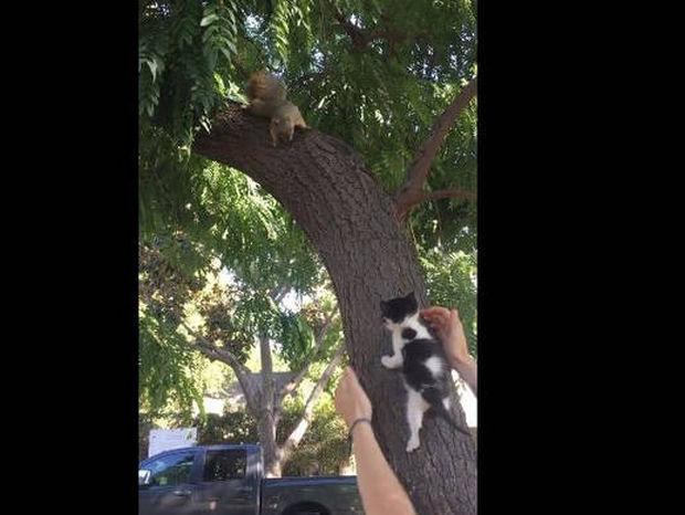 Μία περίεργη φιλία μεταξύ γάτας και σκίουρου (vid)