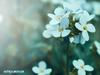 Ονειροκρίτης: Είδες στον ύπνο σου λουλούδια;