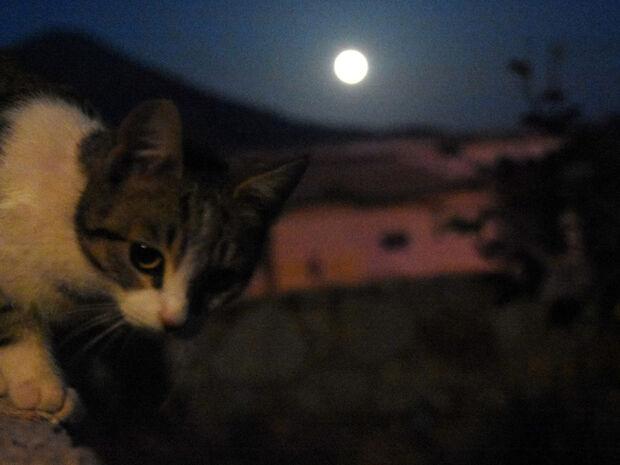 Μαγευτικές φωτογραφίες: Η «σούπερ χιονισμένη σελήνη» φώτισε τον ουρανό της Ελλάδας (pics)