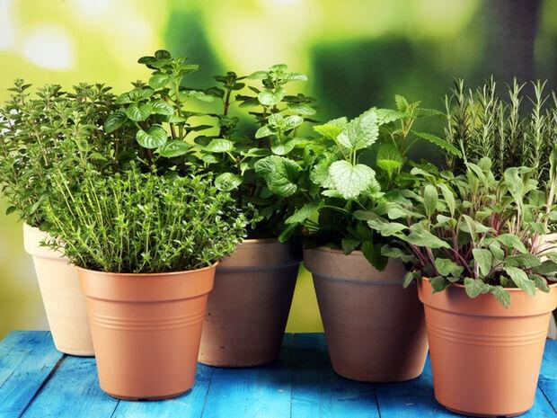 Τα βότανα που αυξάνουν τη θρεπτική αξία των φαγητών (εικόνες)